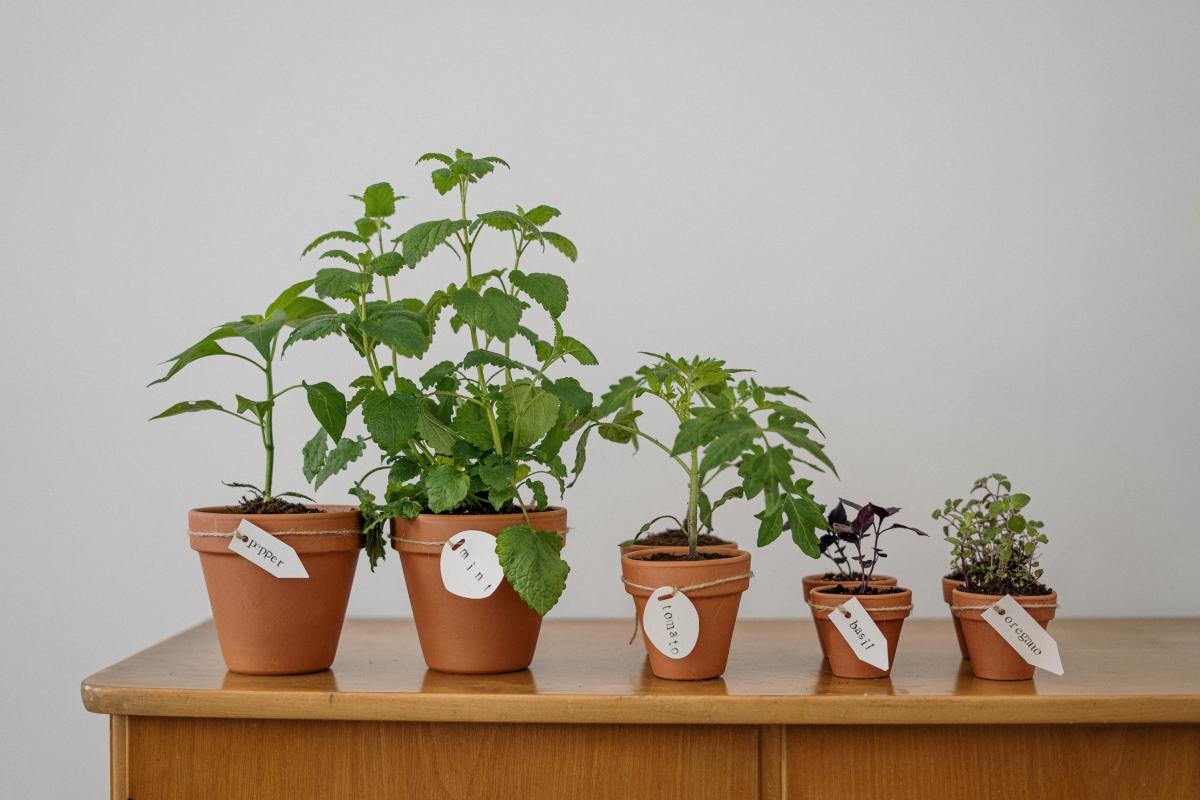 potager maison intérieur outil édducatif pédagogie enfants écologie pots