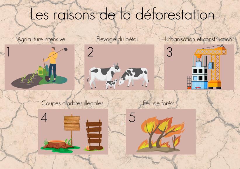 raisons causes déforestation forêts schéma projet silva écologie france