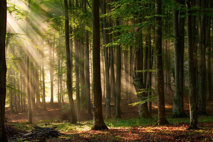 suivre projet silva planter forêt france agroforesterie écologie nature pins arbres