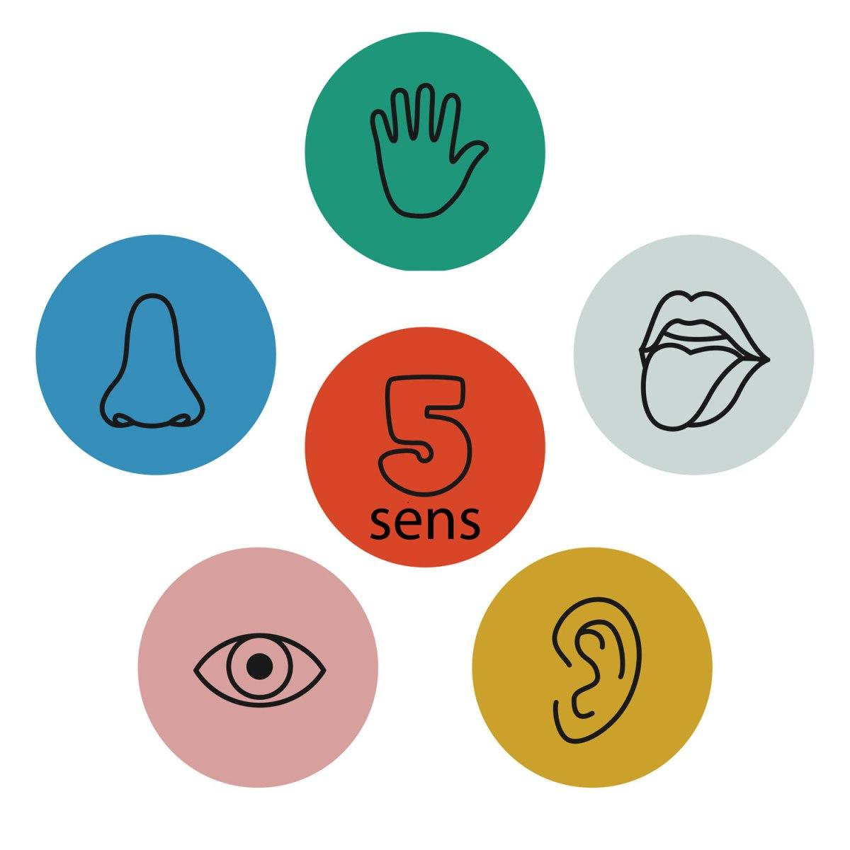 comment découvrir nature famille enfants cinq sens corps infographie