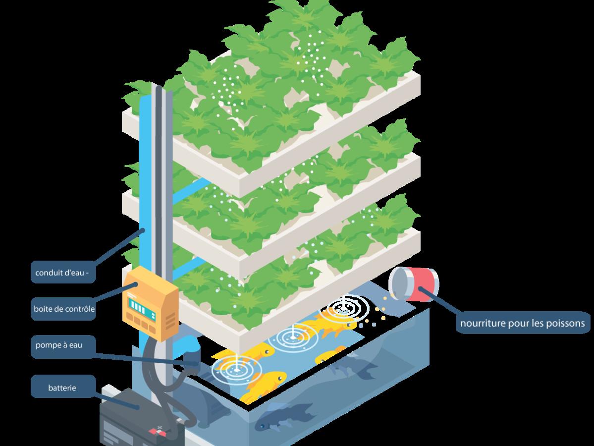 Utiliser technique aquaponie schéma pousser légumes maison économie eau