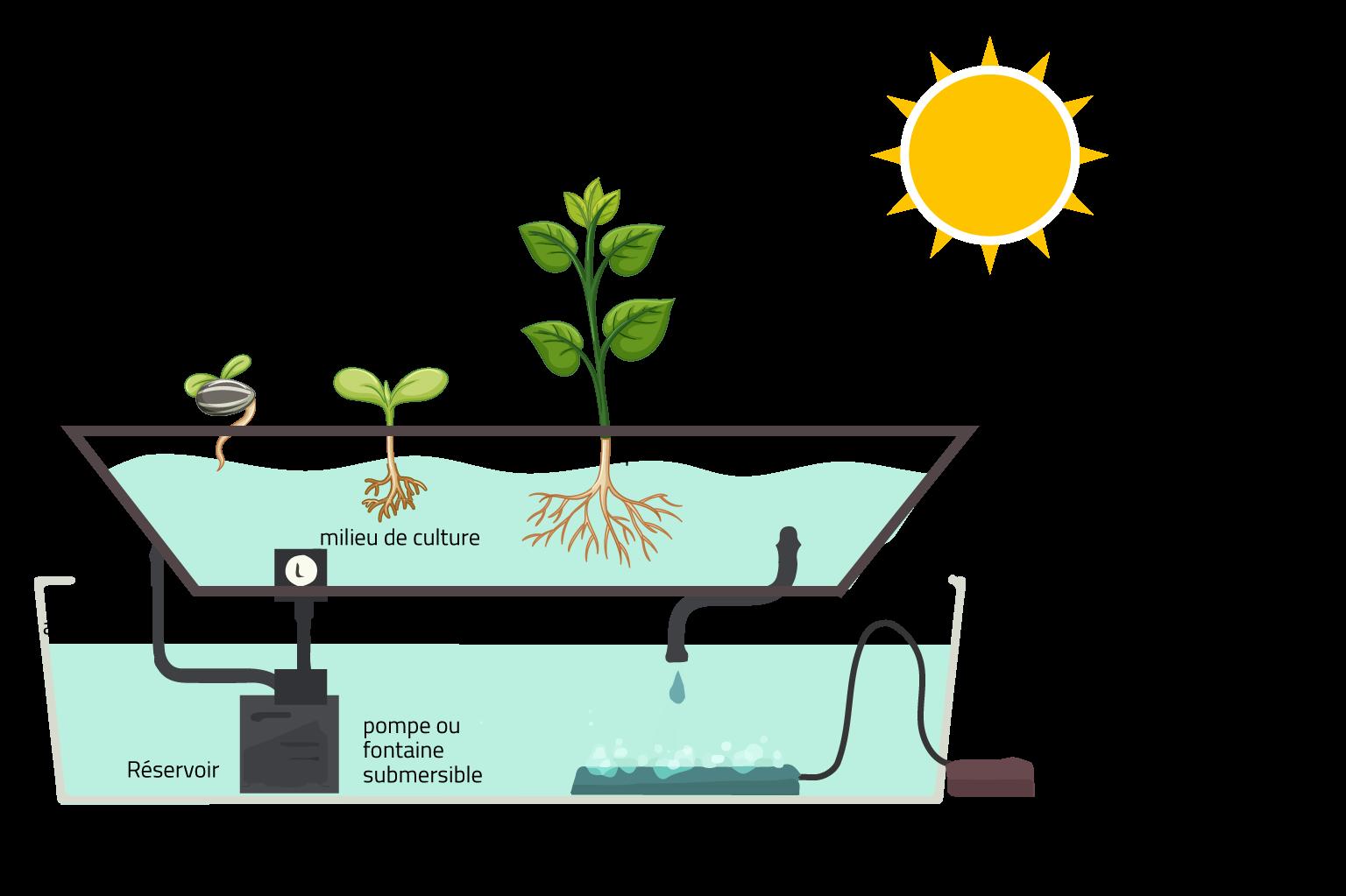 Comprendre culture hydroponique écologique