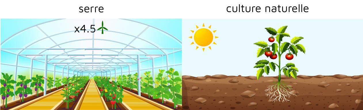Manger alimentation biologique saison serre culture santé écologie